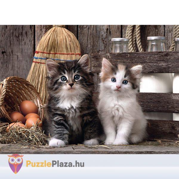 Aranyos Kiscicák Puzzle 1000 db-os. Clementoni 39340 - kirakótt kép