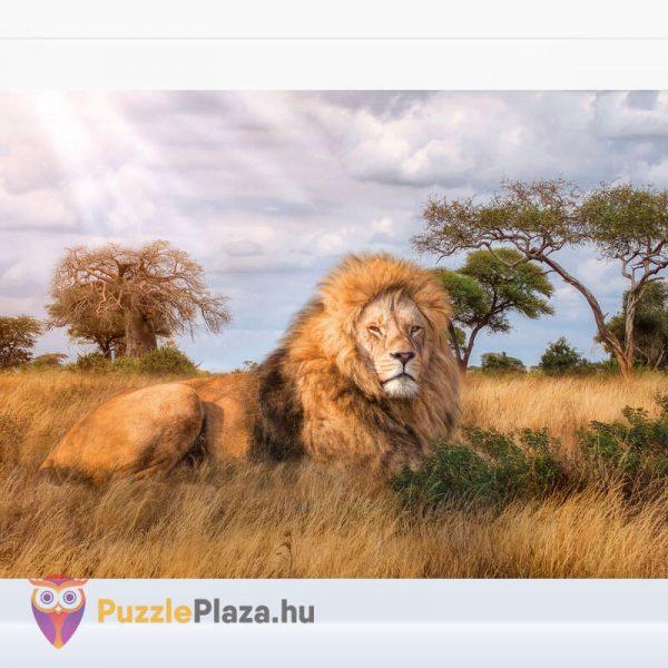 1000 darabos a király, az oroszlán puzzle. Clementoni 39479 kirakott kép
