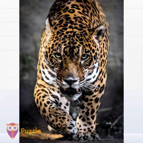 1000 darabos lesben álló jaguár puzzle, Clementoni 39326 kirakott kép