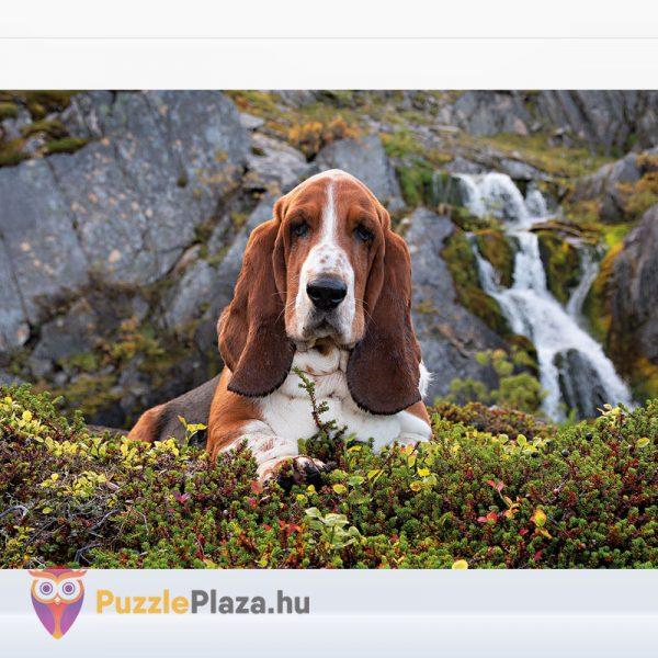 1000 darabos Charlie brown puzzle (basset hound kutya) - Clementoni High Quality Collection 39511 kirakott kép