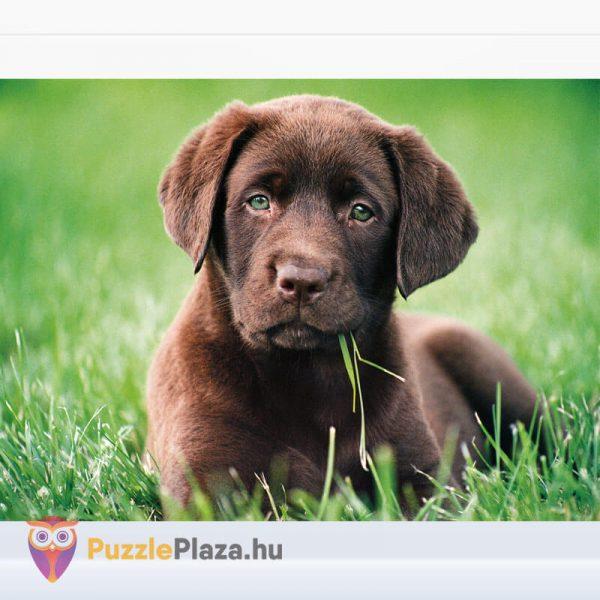 500 darabos, csoki színű, barna kutyua - Clementoni High Quality Collection 35072