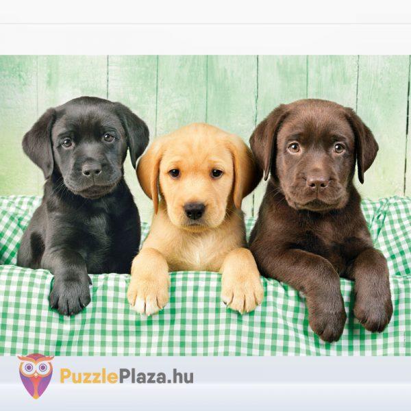 1000 darabos labrador kölyök kutyusok puzzle - Clementoni High Quality Collection 39279 kirakott kép