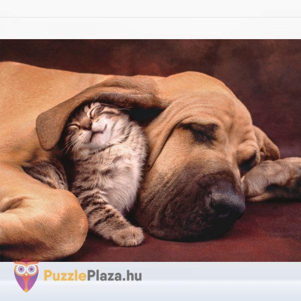 1000 darabos kutya és cica ölelkezik puzzle - Clementoni 35020 kirakott képe