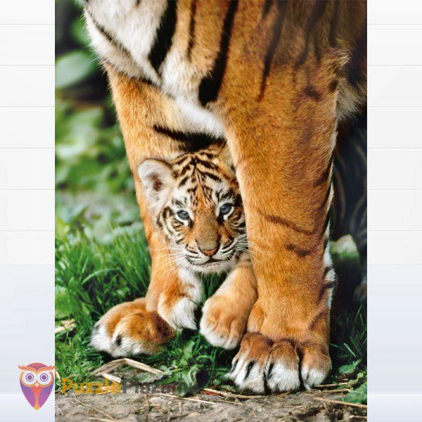 500 darabos bengáli kölyök tigris az anyukája lábánál. Clementoni 35046 High Quality Collection kirakott képe