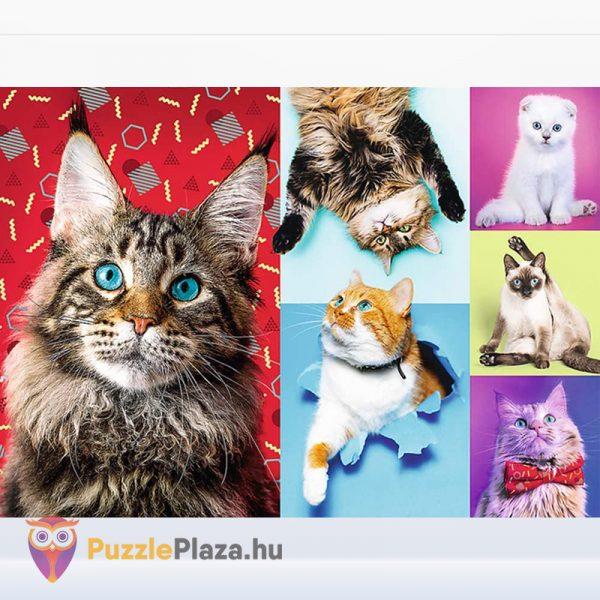 1000 darabos cicás puzzle kirakott képe a Treffl-től
